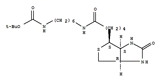 Molecular Structure of 153162-70-0 (Carbamic acid,N-[6-[[5-[(3aS,4S,6aR)-hexahydro-2-oxo-1H-thieno[3,4-d]imidazol-4-yl]-1-oxopentyl]amino]hexyl]-,1,1-dimethylethyl ester)