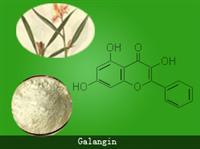 Galangin (CAS: 548-83-4 98%, 90%)(548-83-4)