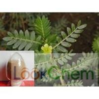 HIgh Pure Protodioscin with 98%HPLC
