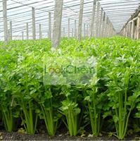 HPLC  98% Apigenin CAS  520-36-5 Plant extracts