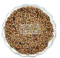 myristicae semen