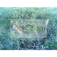 Horsetail Extract Organic Silica 7%