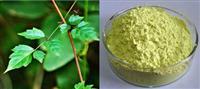 Myricetin extract powder