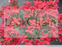 Rhodiola Rosea Extract Salidroside(10338-51-9)