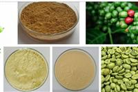 Green coffee Bean Extract Powder/chlorogenic acid 50%-60%1