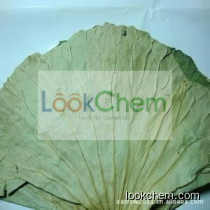 GMP factory supply high quality Lotus leaf extract