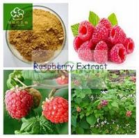 Weight Loss Natural Raspberry Extract, Raspberry Extract Powder, Raspberry Ketone 4%