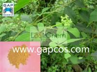 High Quality 98% Gynostemma Pentaphylla Extract