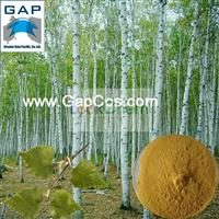 Flavone Birch Leaf Extract with Free Sample
