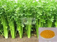 Anti-tumor/high purity Apigenin 80%-98%,chamomile extract,(520-36-5)