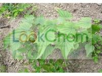 competitive price of Yam extract manufacturer in China(512-04-9)