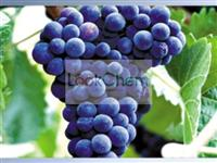 grape seed extract exporter/trader/factory