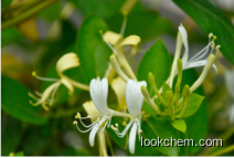 produce Honeysuckle extract