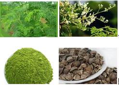 Moringa oleifera powder(525-82-6)