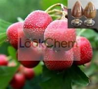Maslinic acid,100% Pure Natural Hawthorn Berry Extract Powder 10%,25% Flavonoids by UV