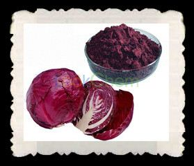 Hot Sale Pure Organic Natural Cabbage Extract