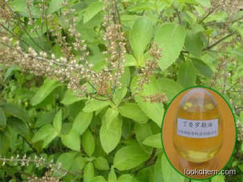 High quality Eugenol-type Basil Oil with best price