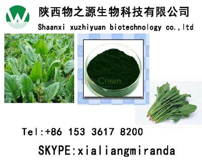 Spinach Extract Vitamin A