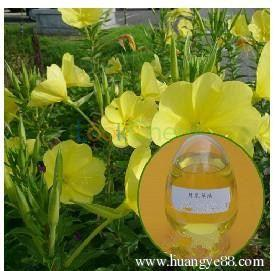 High quality Evening primrose oil with best price