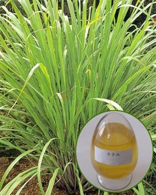 High quality Citronella Oil with best price