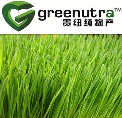 hihg puriry Wheat grass powder 84012-44-2  exporter