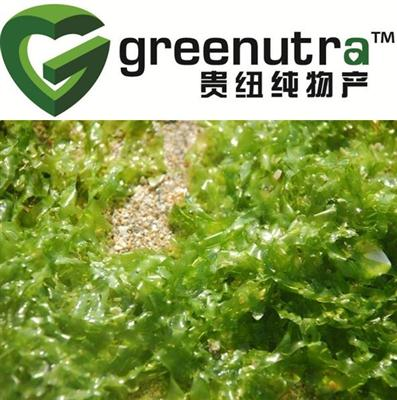 High quality Seaweed Extract Powder
