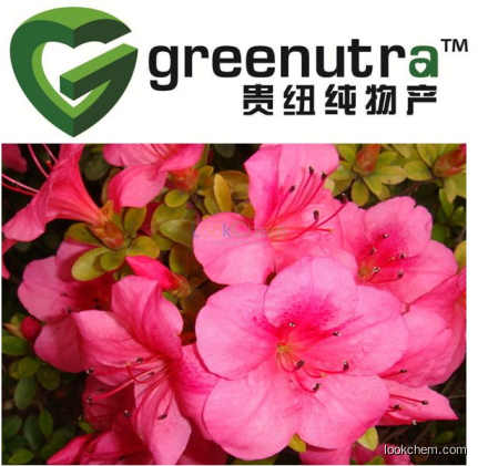 GMP supplying high quality rhododendron powder
