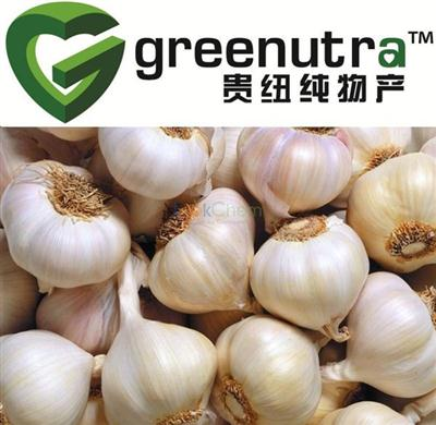 high quality  Garlic extract 539-86-6  exporter
