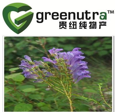 Baical Skullcap Root Extract powder