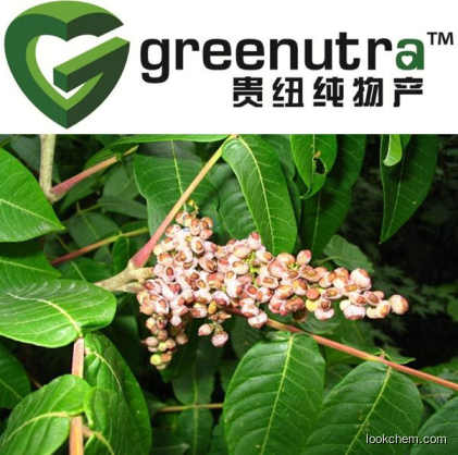 Chinese Gall P.E.