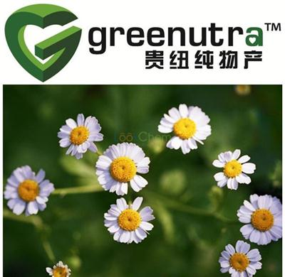 GMP High quality pyrethrum extract powder