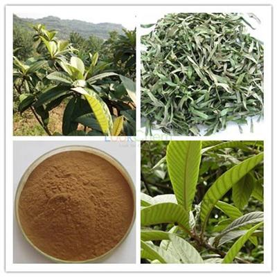Factory supply Loquat leaf Extract Powder, Ursolic Acid 25%-98%