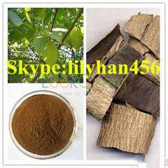 Eucommia Extract 99.9% Purity.High Quality,Lower Price