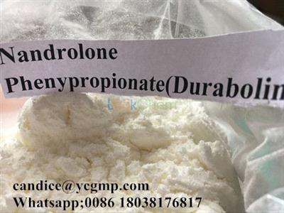Npp Steroid Powder Nandrolone Phenylpropionate 62-90-8 Anabolic hormones
