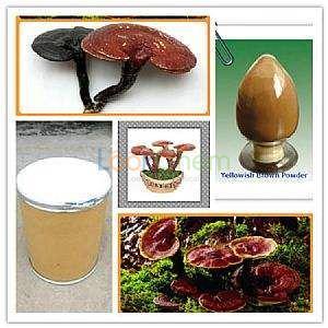 Ganoderma Extract Powder