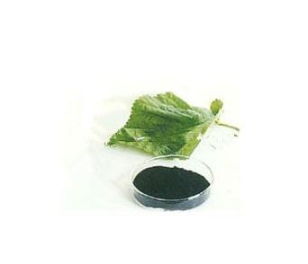 High purity  ChlorophyllA