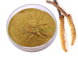 GMP certified supplier hot sale cordyceps extracts