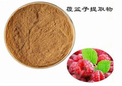 GMP factory made 100% Natural raspberry ketone Raspberry Extract for weight loss