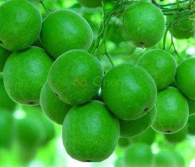 Monk fruit extract Luo Han Guo extract MomordicaFruit P.E Mogrosides MogrosideV 10-90%