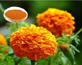 GMP High Purity marigold extract Lutein and Zeaxanthin Powder UV/HPLC 5%-90%