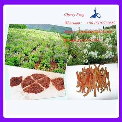 100% natural Eucommia Ulmoides leaf Extract / Chlorogenic acid CAS:327-97-9
