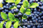 Bilberry extract anthocyanin CAS No.: 84082-34-8