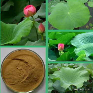 Natural Lotus Leaf Extract Nuciferine CAS No: 475-83-2 with High Quality
