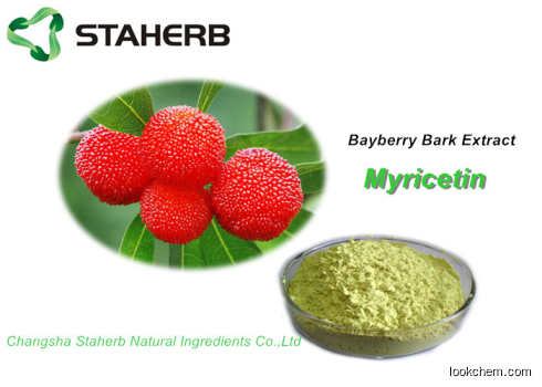 Pure Natural Plant Extracts Myricetin 98% For Health Product