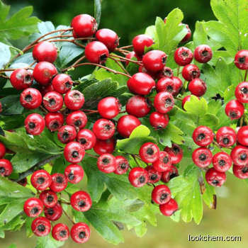 100% natural Hawthorn Extrac CAS No.: 3681-93-4
